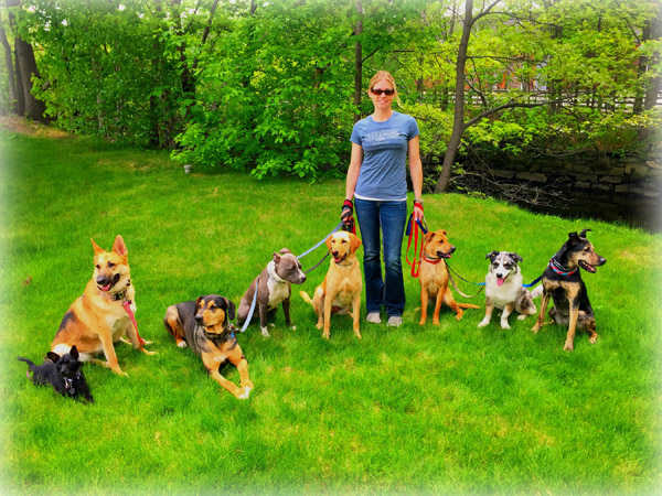 Diana with pack of dogs on a calm and structured walk.